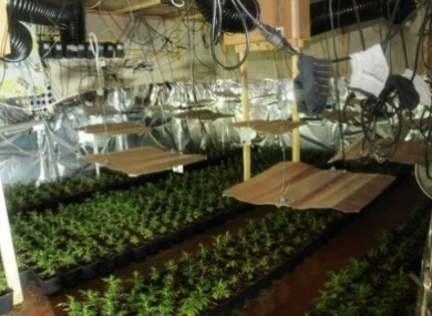 Operation Nitrogen: Some of the plants seized by gardai on Wednesday.