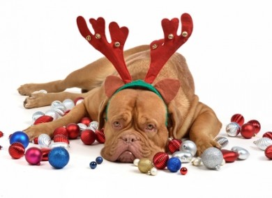 Christmas Is Over.Poll Are You Glad Christmas Day Is Over Thejournal Ie