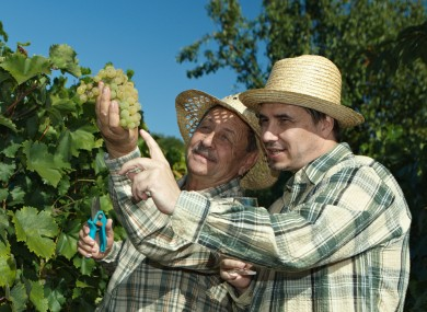 Picture of grape-pickers (working what looks like a three-hour day) posed by models