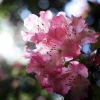 Flowers in bloom at Westonbirt Arboretum in Gloucestershire.
