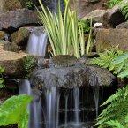 A general view of waterfalls in the rock garden at Birmingham Botanical Gardens.