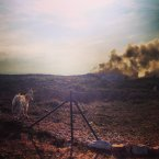 The goats that were saved from the Howth gorse fire.
