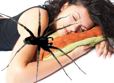 A spider pays a woman an unwelcome midnight visit