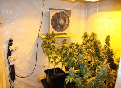 Cannabis grow house. (File photo)