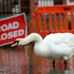 A swan wades around the flood water from the river Stour outside Iford Bridge Home Park in Bournemouth. Residents from the Iford Bridge Home Park, which overlooks the river Stour, had to be evacuated overnight due to warnings of possible flooding because of the wind and high tides.