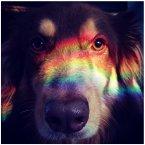 Actress Amanda Seyfried is always posting pics of her good lookin' pup, Flin.<span class=