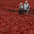 Pearly Kings and Queens plant poppies at the Tower of London in London.<span class=
