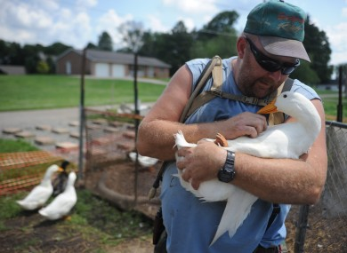 Welker with one of his ducks, who all have names and