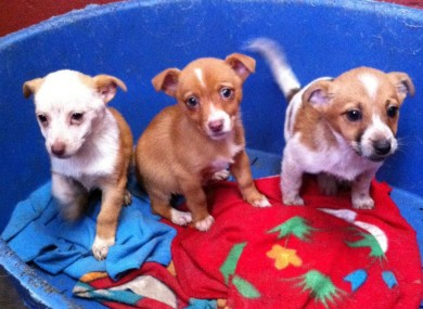 These pups were brought in to MADRA are being found dumped on farmland in Co. Galway late last month