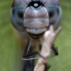 A dragonfly clings to a branch in Surfside, Florida.<span class=