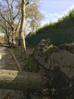 Trees down on Centre Park Road, Cork after Storm Ophelia