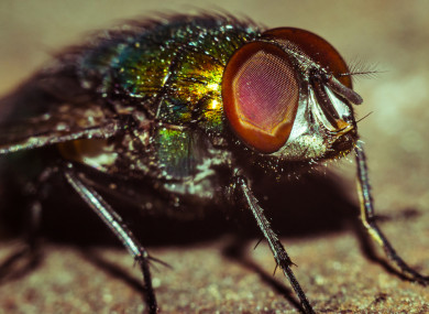 How to protect your home from becoming fly-infested in the heatwave
