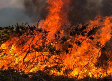 Locals helped firefighters battle the gorse fire.