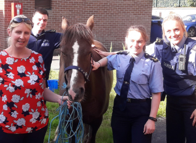 The pony after it was recovered by gardaí in Cork