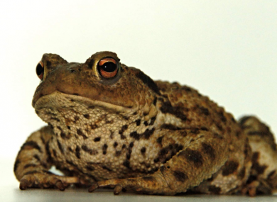 Trevor was the first Common Toad discovered in Ireland.