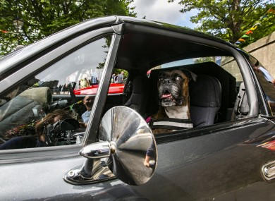 Shelby the Dog from Wicklow sits in a Mazda Mx 5 enjoying the atmosphere of the Dalkey Vintage Car Festival, in Dalkey town today.