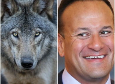The Taoiseach also used the speech to take a pop at the opposition's frontbenches.