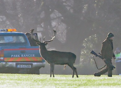 Images of deer cull in Phoenix Park in January.