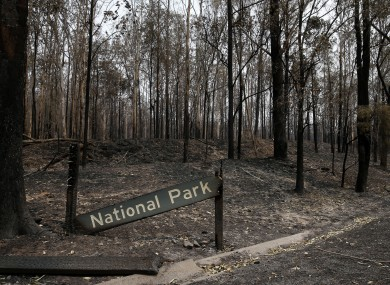 Burnt out bushland is seen south of Taree, New South Wales, Australia