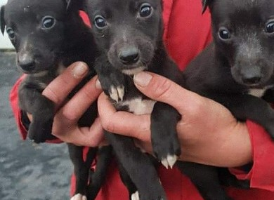 Three of the dogs which were seized.