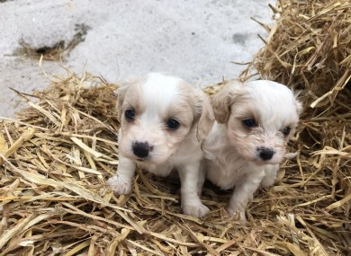 Two of the stolen dogs