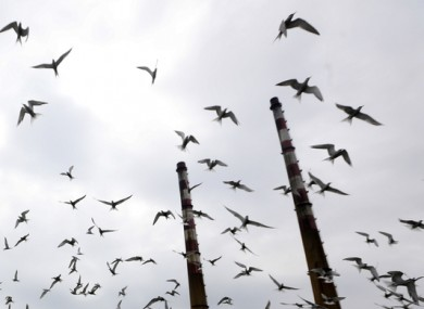 File image of birds flying in Dublin.