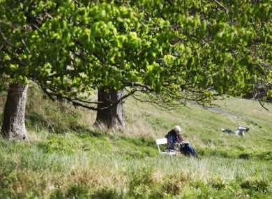 A man reads his newspaper while sitting under a tree in the Phoenix Park Dublin