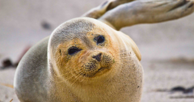 State issues licences to salmon farms to cull protected seals, documents reveal